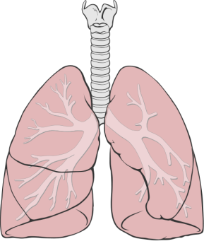 M5L4_Overview_Lungs