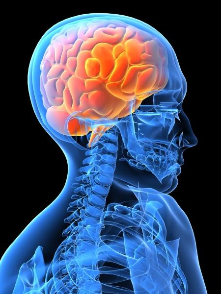 M3L3_Overview_Brain graphic